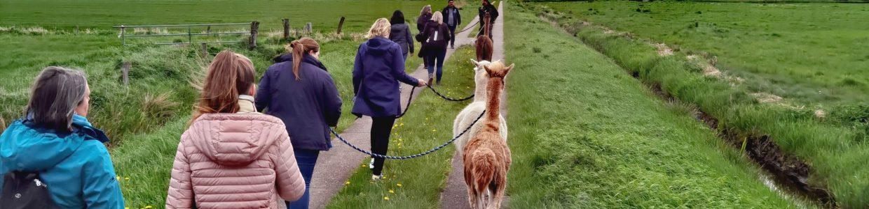 Lama- und Alpakawanderungen im Shop