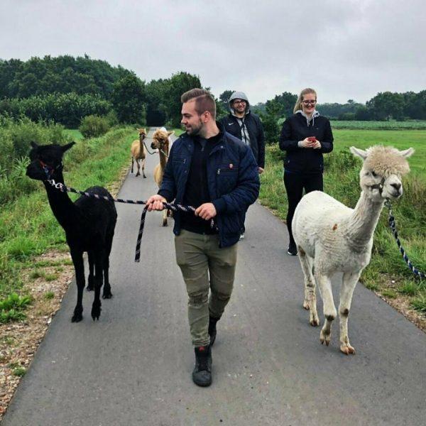 Lama- und Alpakawanderung Gutschein